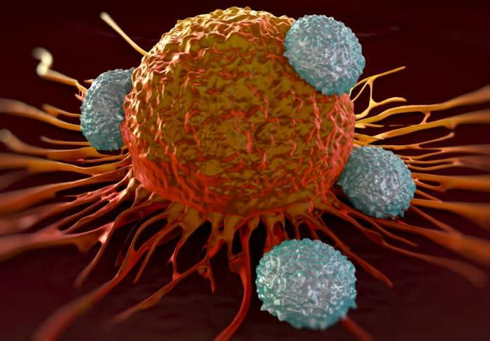 t cells